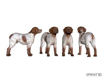Модель собаки по фото